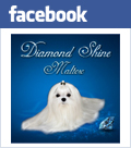Diamond Shine on Facebook