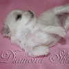 diamond_shine_litter_s_18