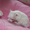 diamond_shine_litter_s_24