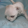 diamond_shine_litter_s_26